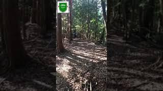 山 能勢 ラン トレイル 妙見 パワー