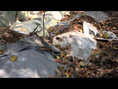 Garden Waste Management