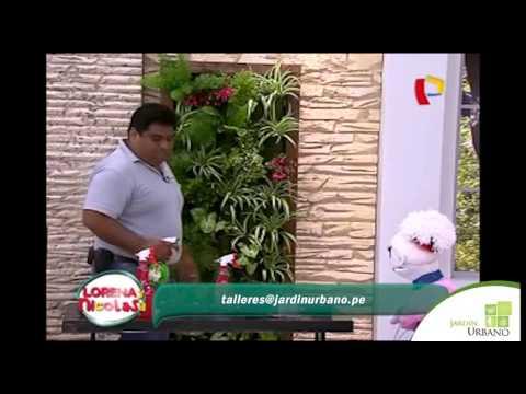 Como hacer un jardin vertical panamericana television for Jardin youtube