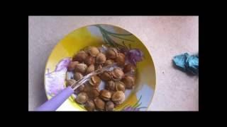 выращиваем абрикосы из косточек