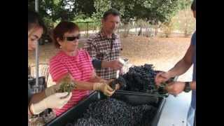 Fountainview Vineyards, Petaluma, California - 400lb of Two-Year Old French Grenache Noir Grapes