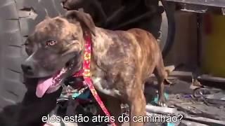 O que encontraram com esta cadela abandonada vai EMOCIONAR VOCÊ