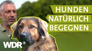 Hundebegegnungen ohne Stress | Hunde verstehen (2) | Tierratgeber | WDR