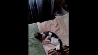 Кошка умирает от старости
