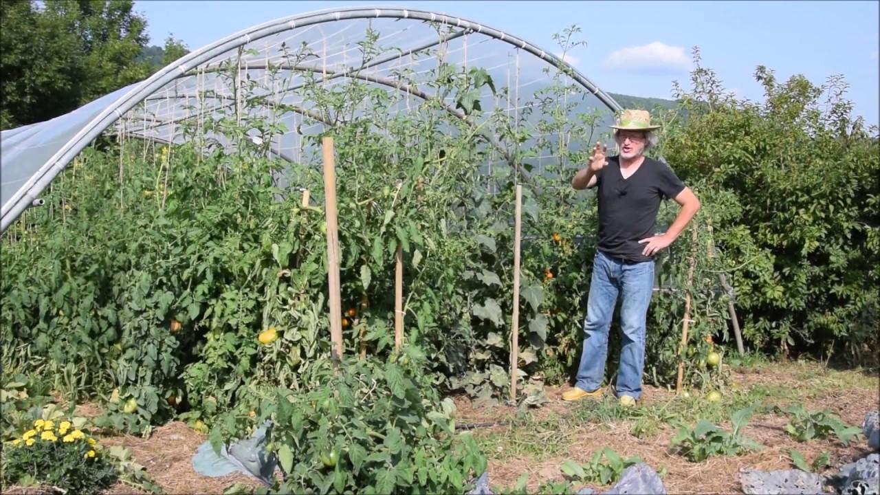 le potager du paresseux tomates comment mieux ma triser le mildiou sans traiter 24 ao t. Black Bedroom Furniture Sets. Home Design Ideas