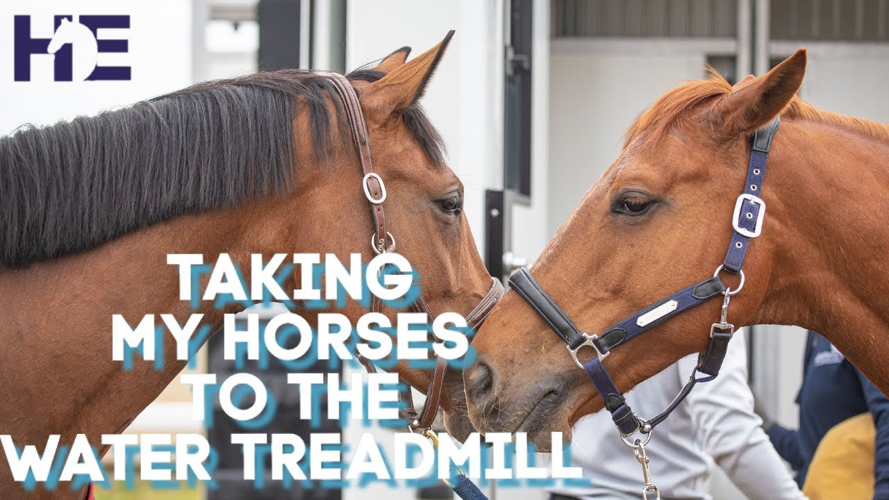A TRIP TO THE WATER TREADMILL | HACKETT EQUINE VLOG