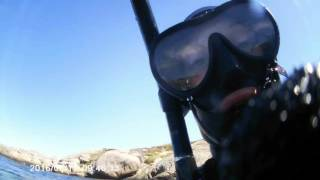 подводная охота в норвегии))
