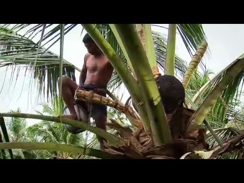 Coconut Production in Sri Lanka (2005)