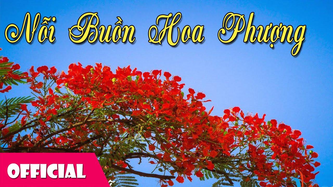 Nỗi Buồn Hoa Phượng - Thanh Thúy [Karaoke Lyrics MV]