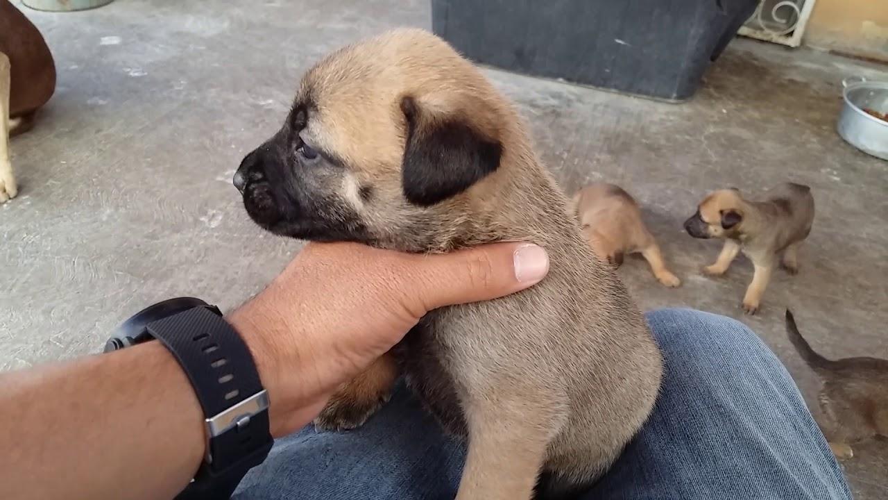 Importancia del destete de los cachorros a los 2 meses