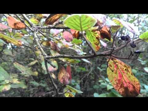 My Wonderful Woodland Walk - Appreciating Mother Earth - Uplifting Energy