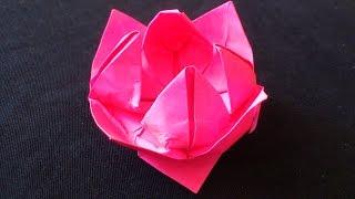 Cara Membuat Origami Bunga Teratai | Origami Bunga dan Tanaman