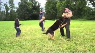 Girl's Best Friend German Shepherd