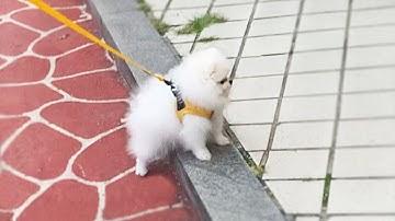 길가에 솜뭉치ㅋㅋㅣ아기 강아지 하네스 추천