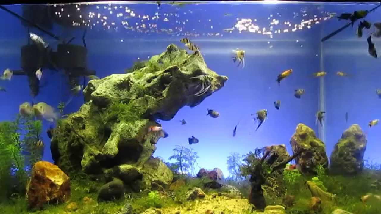 Aquarium landscape ku youtube Aquarium landscape
