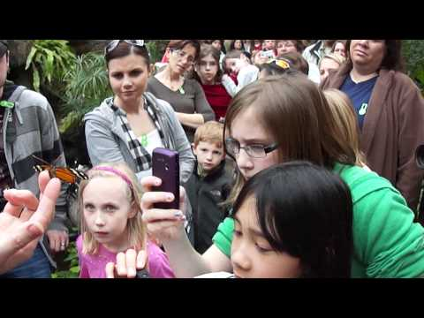 Children & Butterflies at the Franklin Park Conservatory in Columbus Ohio