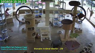 Animal Shelter Bonaire Live Stream