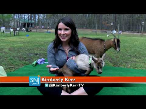 Atlantic County Farm Now Offers Yoga with Goats