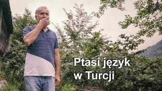 Ptasi język w Turcji (Kuşköy)