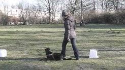 Kamila & Tinti Professional Dog School Braunschweig