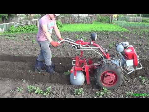 Hilling of potatoes with a motor block.