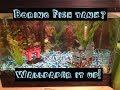 Boring fish tank?  Use Fish Tank Wallpaper!