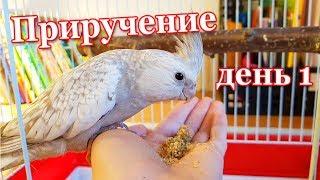 Как Приручить Попугая к рукам. День 1. | Рокки Life