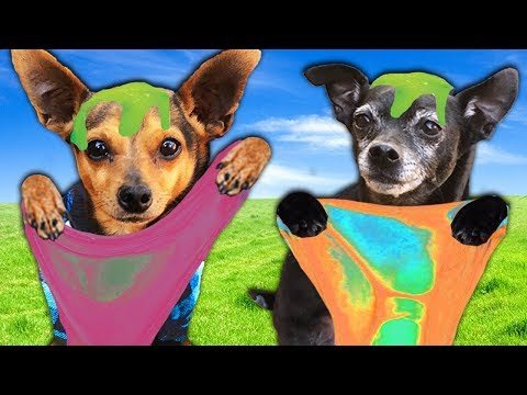 Letting our DOGS Pick our MYSTERY SLIME  Challenge | PawZam Dogs