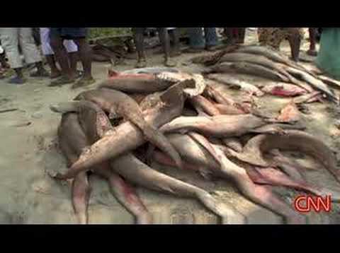 Sierra Leone Overfishing (www.sierraeye.net)