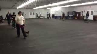 World Class Dog Kennels, Dog Training, Mchenry Il.