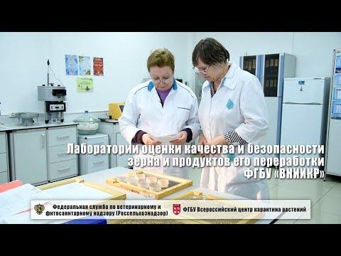 Лаборатории оценки качества и безопасности зерна и продуктов его переработки ФГБУ «ВНИИКР»