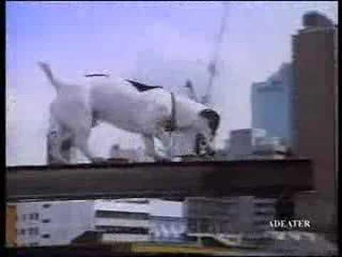 Spot the dog- Telecom New Zealand Ad