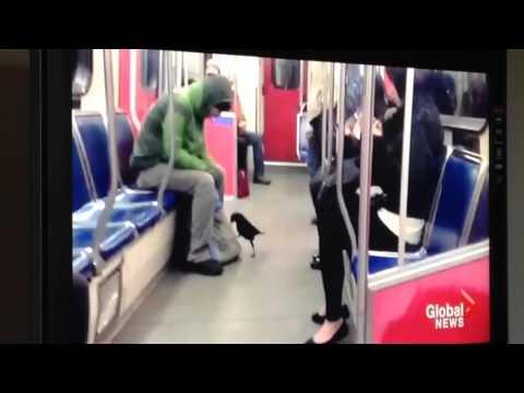 STRANGE bird RIDES the TRAIN!!!