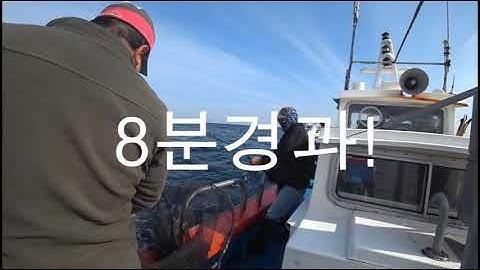 레아 양띠 삼척 대방어 낚시 -저화질