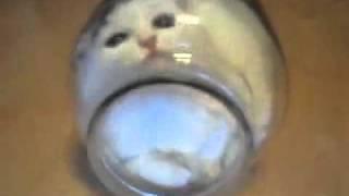 Кот в банке.mp4