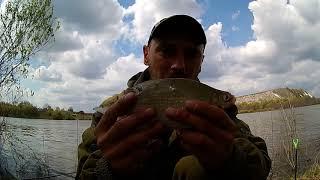Охота на карася рыбалка на реке дон село Николаевка