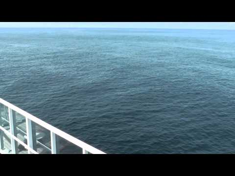 Whale & Dolphin Watching In The Bay Of Biscay