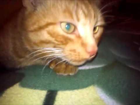 6 дек 2015. Читайте также отзывы о препарате от стресса кот баюн. Цена флакона успокоительных капель стоп-стресс для кошек в россии.