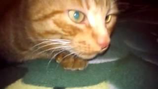 кот после второй таблетки валерьянки