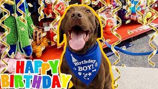 My Labrador's 6th Birthday Celebration!