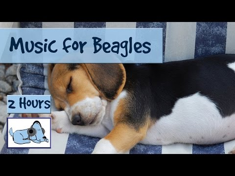 Calming Music for Anxious Beagles and Hounds.
