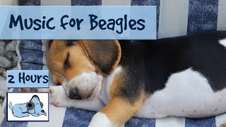 Music For Beagles And Hounds. Calming Music To Relax Anxious Dogs.