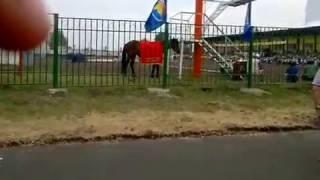 """Сур-Харбан 2015 -""""Живой конь - Приз за абсолютное первенство среди мужчин"""""""