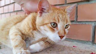 Cat Purring During Massage