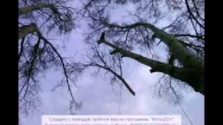 удаление деревьев киев и область(067 143 43 77, 063 196 76 00 Анатолий http://alpinizm-kiev.ucoz.ua/Выполним работы по кронированию деревьев, резке деревьев,..., 2011-12-26T17:05:21.000Z)