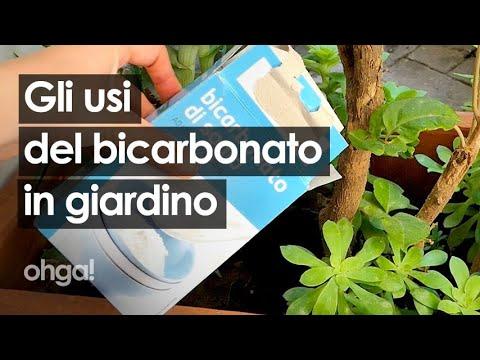 Versa il bicarbonato nella pianta: gli usi del bicarbonato per il giardino