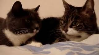 2 Adorable Cats Have the CUTEST Conversation!