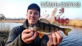 Наловил кучу рыбы за один час Ловля окуня на микроджиг Рыбалка на ультралайт весной