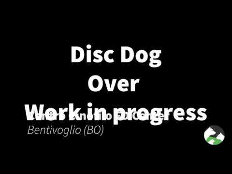 Disc Dog - Over - Work in progress