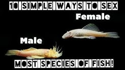 How Can You Tell If Your Fish Is Male OR Female? Easy Sexing For Most Aquarium Species -Boys & Girls